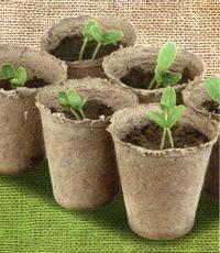 Как сажать и выращивать рассаду помидор в торфяных горшочках