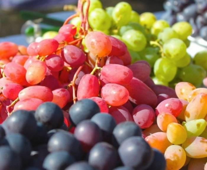 Когда сажать саженцы винограда