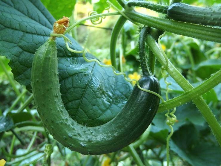 Простые приемы эффективной борьбы с вредителями и болезнями моркови