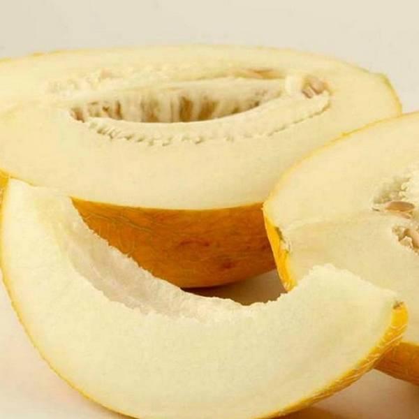 Уникальные свойства масла жожоба и рекомендации к его применению