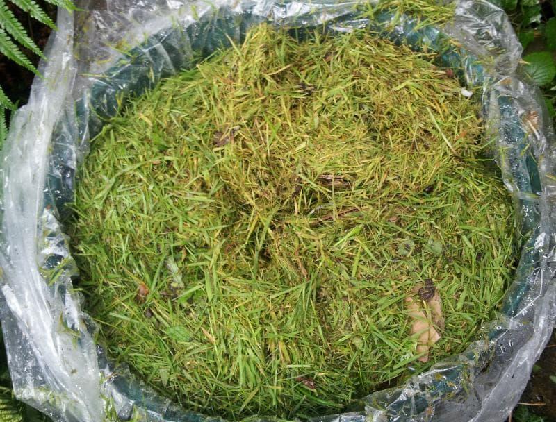 Как сделать удобрение для огорода из травы: способы приготовления