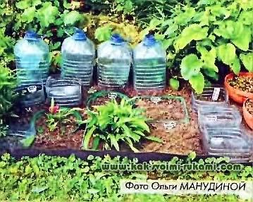 Советы начинающему цветоводу: размножение алоэ черенками