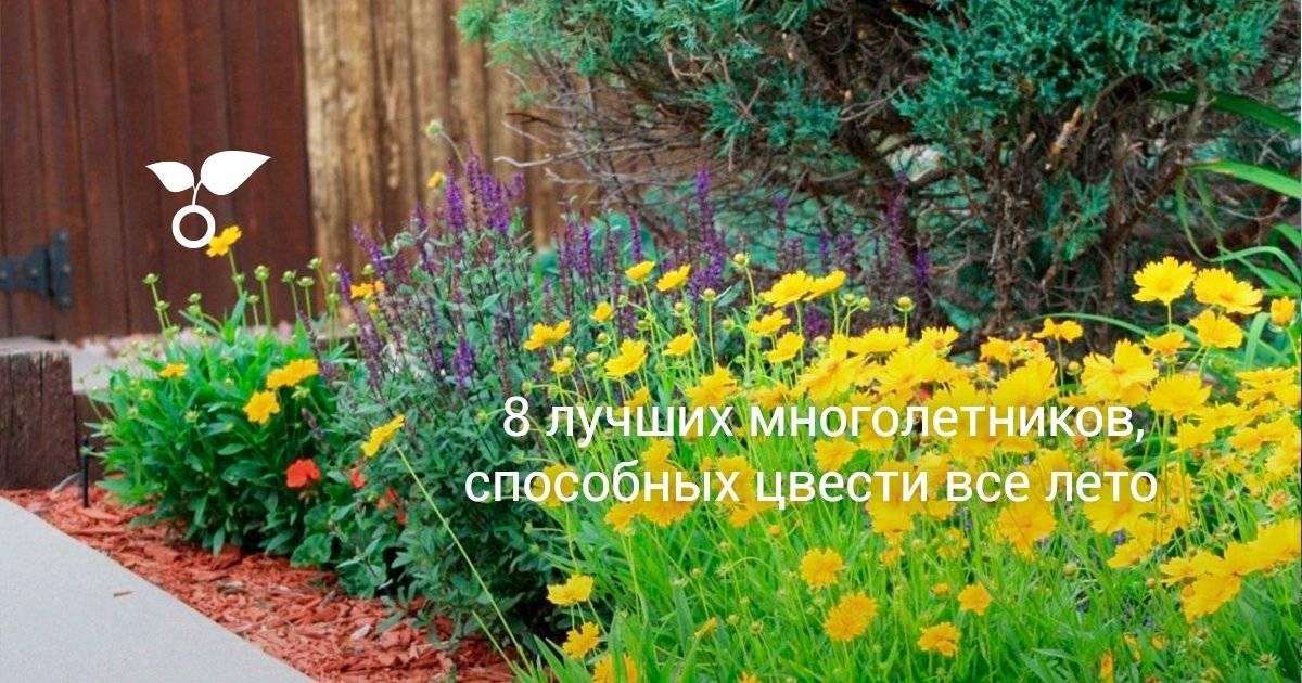 Неприхотливые цветы для сада: долгоцветущие однолетники и многолетники