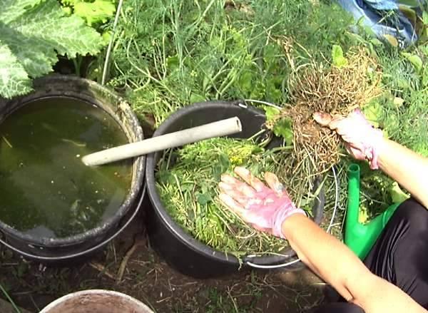 Удобрение из травы – как сделать зеленую подкормку