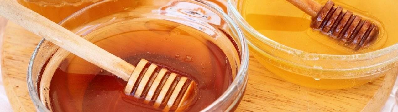 Свойства и особенности рапсового меда