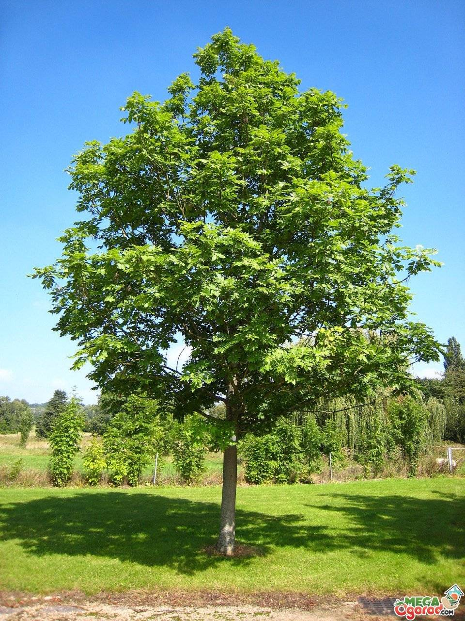 Карликовый сад: особенности деревьев и их выращивание