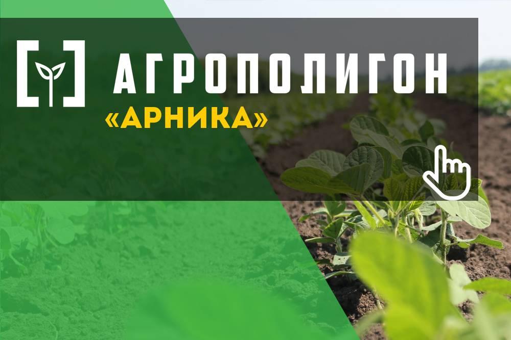 Технология выращивания и возделывания чечевицы: как и где она растет, ее урожайность