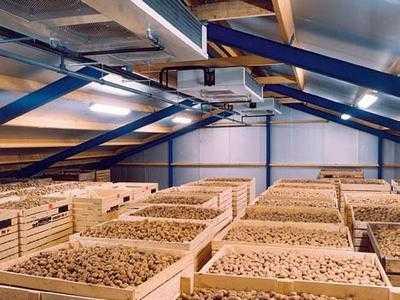 Как организовать хранение картофеля зимой так, чтобы он пролежал до весны