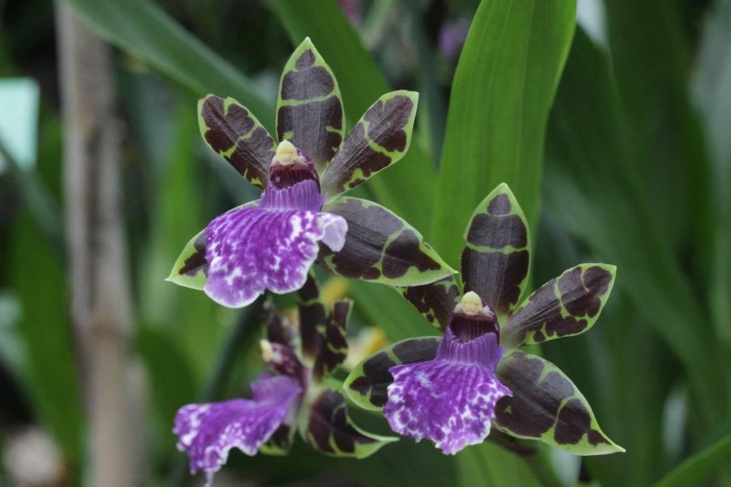 Гниль у орхидей – что делать и как вылечить растение, признаки и причины болезни, меры профилактики