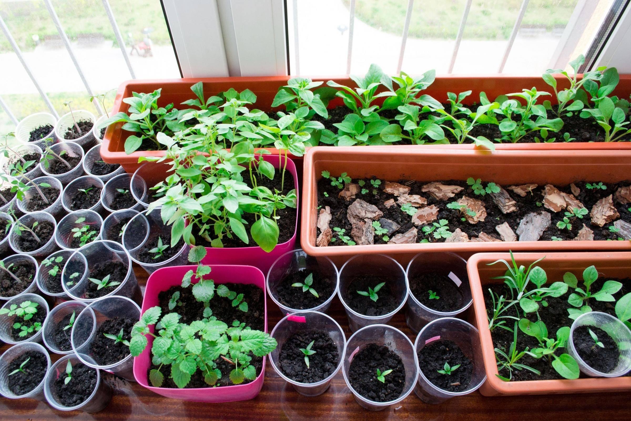 Удобрение агрикола для рассады овощей