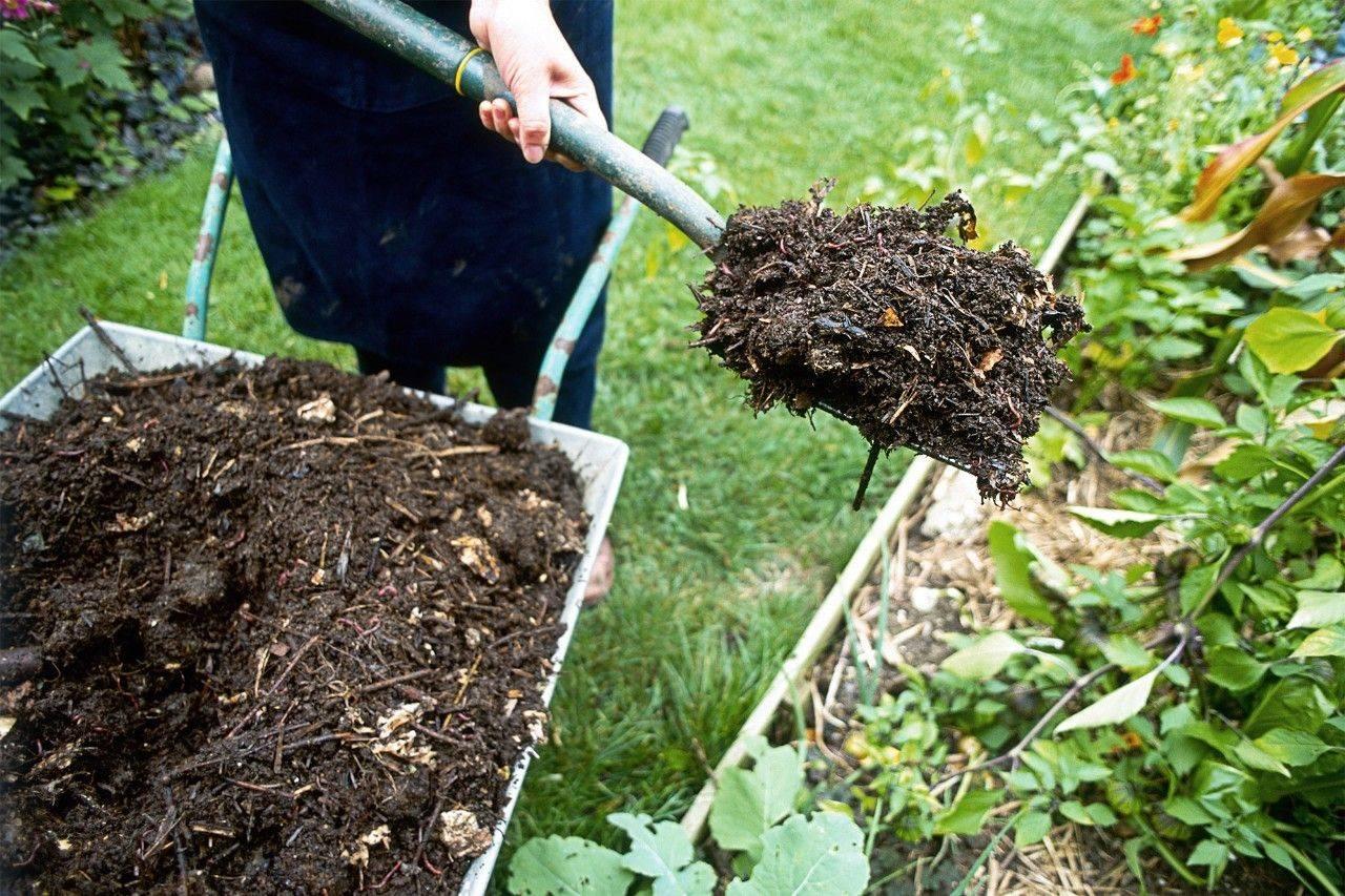 Когда и как правильно посеять огурцы и кабачки в открытый грунт