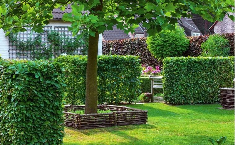 Быстрорастущие вечнозеленые живые изгороди в ландшафтном дизайне