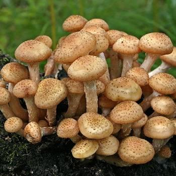 Как правильно собирать грибы? охота объявляется открытой!