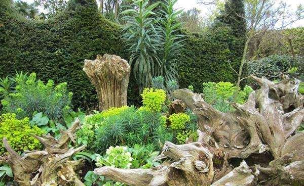 Рутарий в саду схемы посадок. удивительный рутарий – сад корней на вашем участке. размещение в ландшафтном дизайне