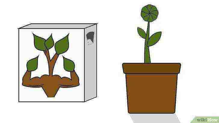 Всё о выращивании подсолнечника