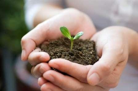 Подготовка грунта для рассады — какой грунт лучше, видео, состав