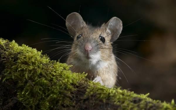 Как бороться с мышами на даче