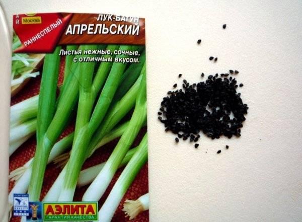 Супер-овощ для здоровья: чем полезен репчатый лук