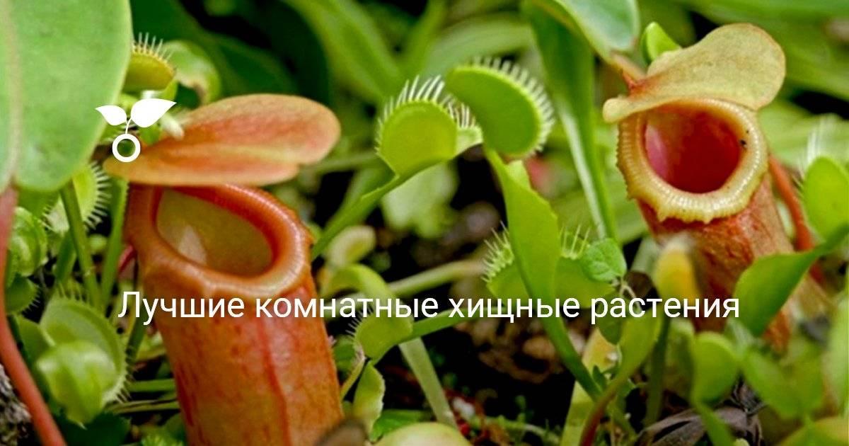 Растения хищники, фото и названия, характерные особенности