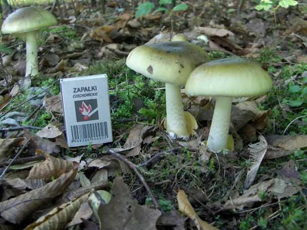 Виды и названия грибов с картинками
