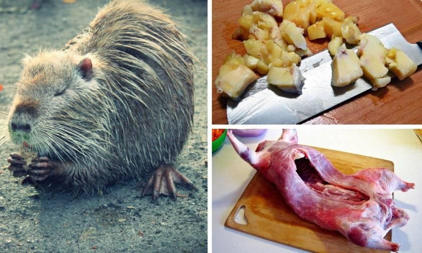 Мясо нутрии: польза и вред
