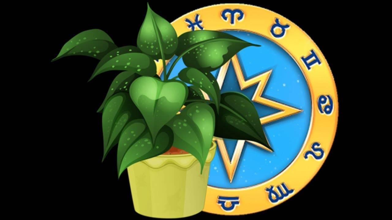 В чем польза и вред спатифиллума, можно ли держать в доме или офисе? опасен ли цветок для здоровья?