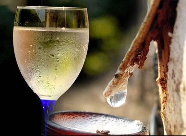 13 лучших рецептов напитков из березового сока на зиму