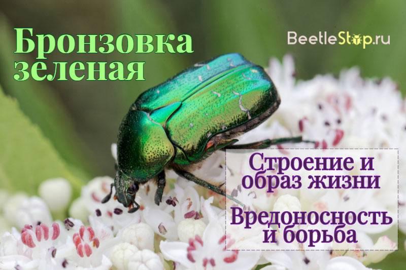 Самые распространенные насекомые – вредители полей