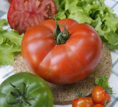 Томат катя — лучший сорт для юга россии, дающий до 14 кг плодов с 1 м²