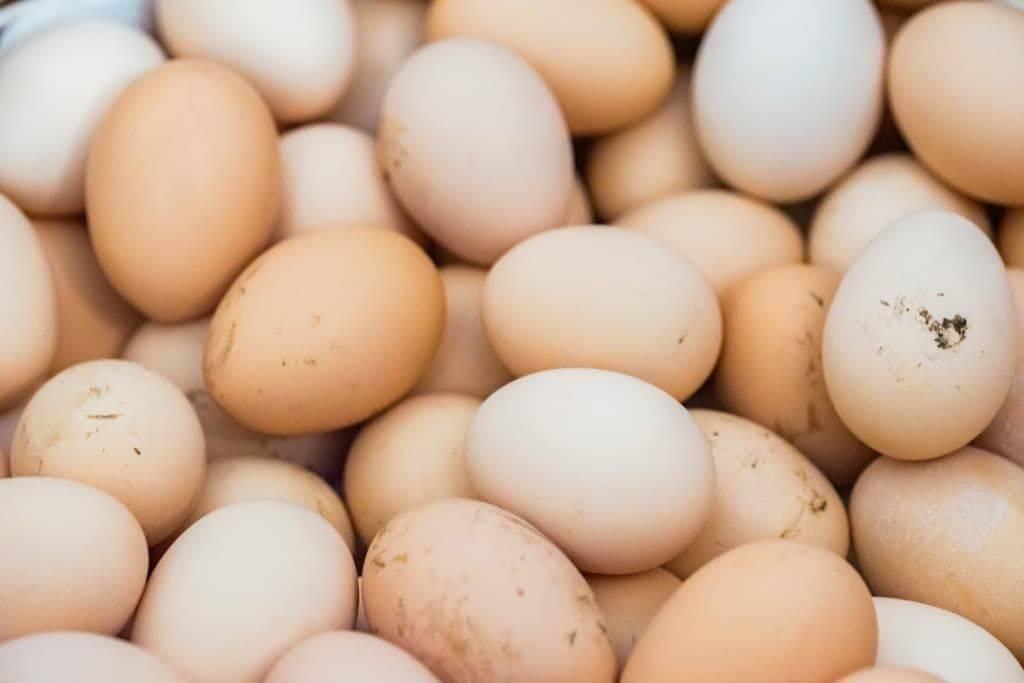 Когда начинают нестись куры – возраст яйценоскости кур
