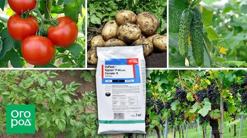 Препарат ХОМ - инструкция по применению для растений, видео
