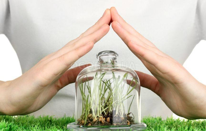 Лучшие стимуляторы роста корней растений: применение и характеристики