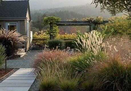 Декоративные травы и злаки для украшения сада и дачного участка: фото и названия самых популярных растений, рекомендации по посадке