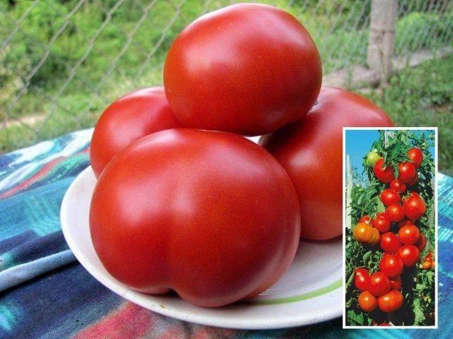 Томат марьина роща — гидрид-новинка с невероятной урожайностью