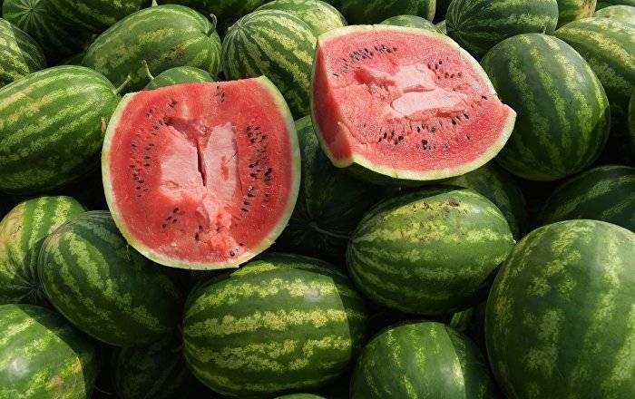 Арбуз: польза ивред для организма человека, калорийность, как выбрать спелую ягоду