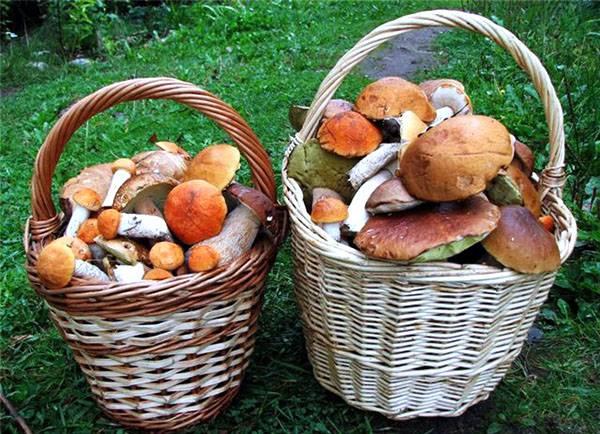 За что вас могут оштрафовать в 2020 году при сборе грибов и ягод