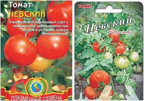 Как вырастить помидоры в ленинградской области