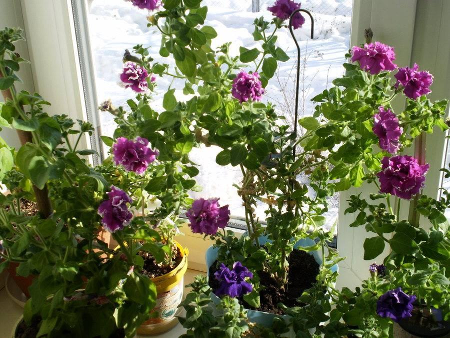 Все способы размножения каланхоэ. как ухаживать за цветком после процедуры?