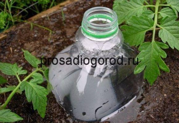 Как организовать капельный полив из пластиковых бутылок для огурцов своими руками