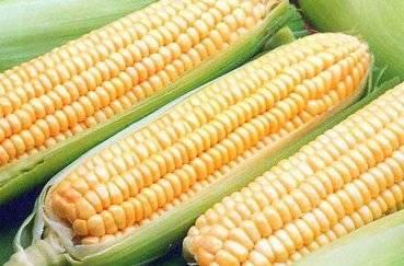 Посадка фасоли в открытый грунт семенами сроки и схема посадки надо ли замачивать семена