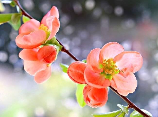 Календарь садовода и огородника на апрель