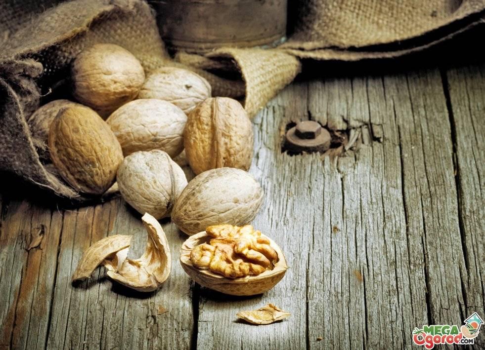Как применять скорлупу грецкого ореха. рецепты лечения скорлупой грецкого ореха