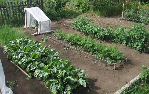 Секреты получения урожая с применением метода митлайдера
