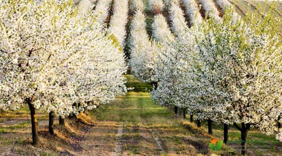 Как размножать плодовые растения?