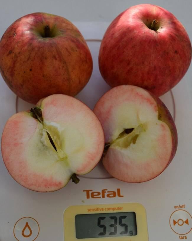 Сорт яблок штрифель (штрейфлинг, осеннее полосатое): фото и описание, способы размножения