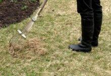 Как ухаживать за газоном весной на даче: его восстановление после зимы