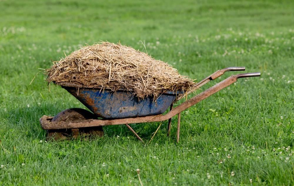Существует ли удобрение для всего огорода сразу?
