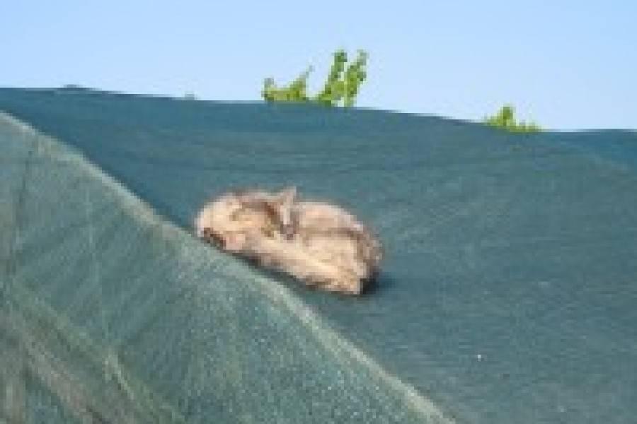 Как использовать затеняющую сетку для теплиц