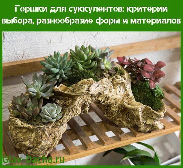 Правильный уход за суккулентами: выращивание и размножение дома