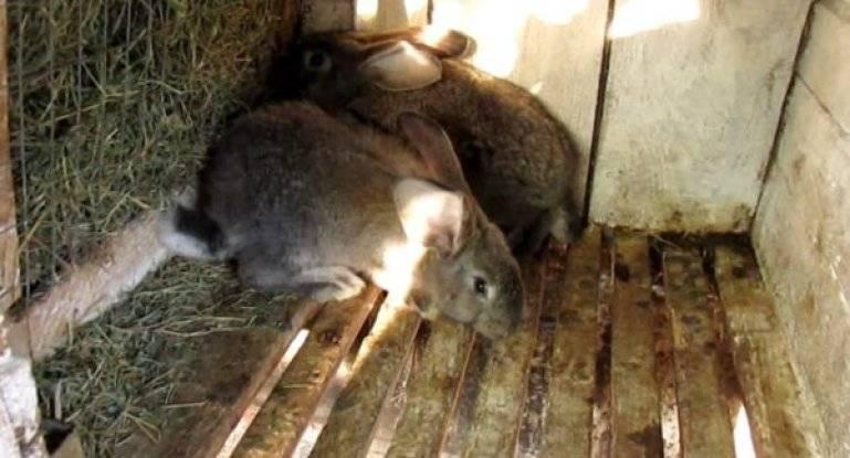 Трава и сено для кроликов